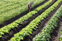画像:外国人の就農解禁へ、派遣企業が農家に派遣 弁護士は「繁忙期の農家を回ることで長時間労働になる恐れ」と警戒