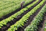 外国人の就農解禁へ、派遣企業が農家に派遣 弁護士は「繁忙期の農家を回ることで長時間労働になる恐れ」と警戒