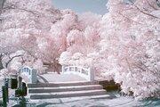 緑の葉、桜色に咲き誇る ヒトの目には見えない光捉えた幻想風景、赤外線写真に熱視線