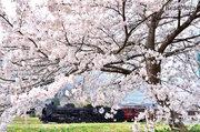 【春休み2018】都心から一番近い蒸気機関車、秩父鉄道SL3/31より運行
