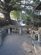 インスタ映えスポット「埋没鳥居」が持つ文化的側面 その魅力が深~い!