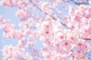 新型コロナによる花見の経済損失は約2,534億円…関西大