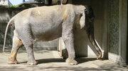 はな子が去って、まもなく2年... 井の頭自然文化園の「ゾウ舎」特別開放