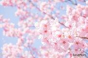 【中止】【中学受験2021】相模大野・町田地区私立合同説明会5/28…桜美林など18校