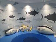 塩釜で「魚」を学ぶ! 魚市場に新ミュージアムを併設