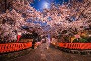 まるで映画のワンシーン 月明かりの中、こぼれるように咲く祇園の夜桜が幻想的すぎる