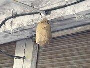 軒先に「ダミーハチの巣」をつるすとハチが寄り付かなくなるってホント? 専門家に聞いた