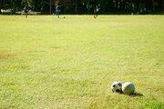 「ウチの庭は公園じゃない!近所の子供が大集合、ボール遊びで植木はボロボロ。注意しても効果はなく...」(山梨県・30代男性)