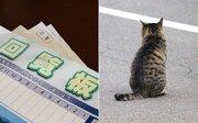 回覧板に「野良猫問題について」 駆除のお願いかと思いきや...意外な内容に「泣けた」