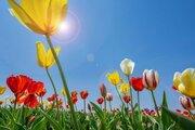 「春」の語源になった、3つの「はる」を知っていますか?