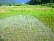 未来の農業はこうなる?ドローンで田んぼに「種もみ」まきの珍実験