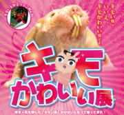 インスタ映え間違いなし!「キモかわいい展」東京ソラマチで開催 「コタケネズミ」など強烈すぎる動物30種類を展示