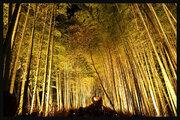 日本の美を壊さないで!「観光名所の落書き」京都嵐山の竹林で深刻な問題に