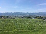 <東京暮らし(11)>「日本ワイン」が熱い!