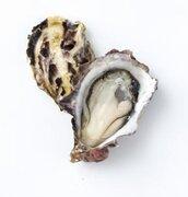 夏が旬!宮城の「あまころ牡蠣」 濃厚な甘みがギュ~っと詰まった新名物