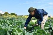 30歳、大手ウェブメディア編集者が農家に転身「最近、びっくりするぐらい寝つきがいい」