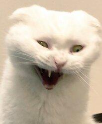 画像:ネコに鬼神が取り憑いた!?