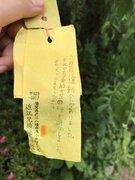 滋賀を飛び立った花の種、300キロ離れた神奈川に 小学生が風船で「よかったらうえて」