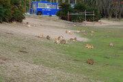なぜ?「ウサギの島」大久野島に、居なかったはずの野良猫が...