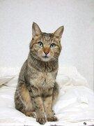 大阪の地震で飼い猫の脱走相次ぐ 「自宅の周辺にいることが多い。落ち着いてペットの名前を呼んで」と専門家