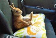 かわいすぎて悶絶!窓の外を覗こうと背伸びしたウサギ… 見えないと悟ったときの姿が話題に