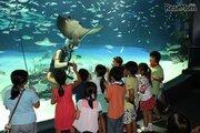 サンシャイン水族館の親子宿泊企画、7月25日より申込受付
