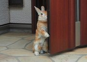 「行っちゃうの?」ウサギがドアの陰からご主人様を見送る姿が切なすぎる!