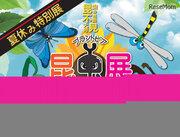 【夏休み2019】福井総合植物園プラントピアで「昆虫展」8/10-8/19開催