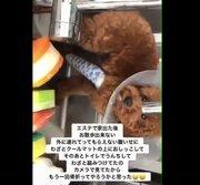 キャバ嬢が飼い犬虐待「もう1回骨折ってやろうか」 SNSの動画拡散きっかけで命を救われる