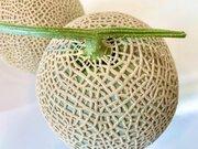 メロンに網目模様ができる理由、ご存じですか?