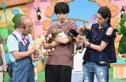 福士蒼汰、自らが触れあった保護犬の譲渡会へ「天才!志村どうぶつ園」