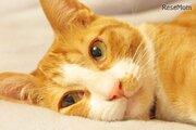 8月8日は「世界猫の日」愛猫の健康や安全・動物愛護を考える