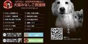 東日本大震災を教訓に...豪雨で被災したペットたちへの支援