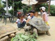 【無事発見】脱走ゾウガメ「アブー」はどこへ? 岡山の動物園が情報募集、発見者には50万円
