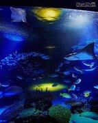 サンシャインシティでお月見イベント、水族館の水槽ライトアップなど