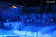 静岡市立日本平動物園、4日間限定「夜の動物園」