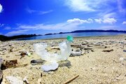 プラ製ストロー廃止で海洋汚染は防げるか? 自然保護協会はレジ袋やペットボトルの使用削減も呼びかけ「このままでは海が危ない」