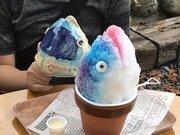 思わず二度見のインパクト! 「カツオの頭部」再現したかき氷が話題→なぜ作った?考案者にきっかけを聞くと...