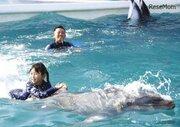 鴨川シーワールド、イルカと泳げる職業体験…小5・6年生募集