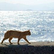 「猫の島」青島、全210匹の猫に不妊・去勢手術実施 猫捕獲のため「観光客の方は実施期間を避けてご来島ください」