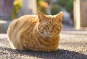 大阪お初天神の「さくらねこ」 野良猫を殺処分させない町の取り組み