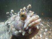チョウザメに指をパクパクされてみない? 北海道の水族館にいる「けったいな魚」と仲間たち