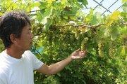 北九州でワインを造る! 構想20年、小さなワイナリーが特区で生まれた