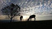 この写真はアフリカ? →奈良の若草山でした