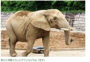 動物園からゾウが消える?仙台と秋田で交換プロジェクト開始