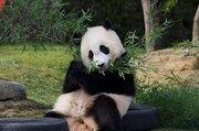 「パンダだけではないが...」 和歌山・アドベンチャーワールド、動物園の頂点に立つ