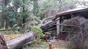 貴重な「レバノン杉」も倒木 京都府立植物園、100本以上が台風21号被害