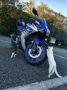 「これで安全ニャ!」 ネコ整備士さんのバイク点検に癒される