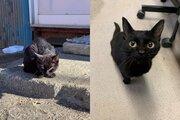 警戒心マックスの野良猫に、全力で愛情を注いだ結果がこちら