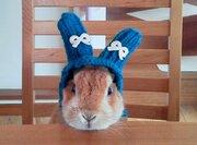 冬の帽子をかぶったうさぎ 長い耳をすっぽりと収納した可愛い姿が話題に